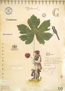 Goldenseal with Indian