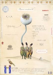 Opium Seed Head
