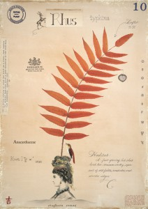 Sumac with Bust
