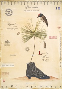 White Pine with Shoe