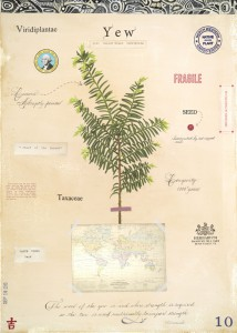 Yew with Map