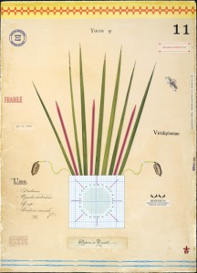 Yucca with Needles