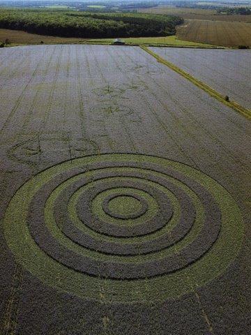 Borage crop circle
