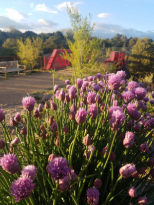 Chives and Bridge